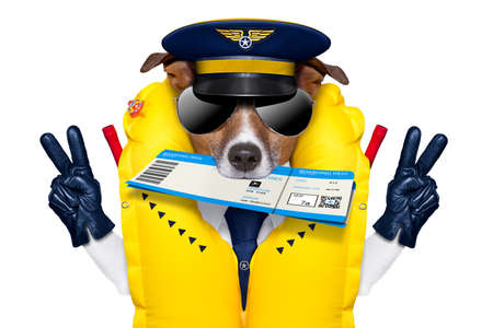 occupation: jack russell airline pilot or  flight attendant dog , with check in boarding pass ticket in mouth , isolated on white background, peace and victory fingers