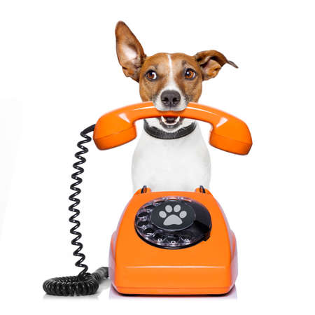 Jack russell dog with glasses as secretary or operator with red old  dial telephone or retro classic phone Imagens