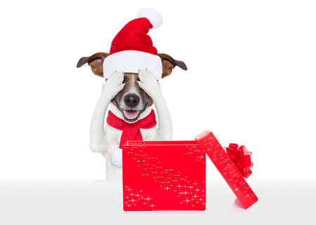 decoration: jack russell dog with red  christmas santa claus hat  for xmas holiday hiding with closed eyes ,excited and surprised for the gift or present box