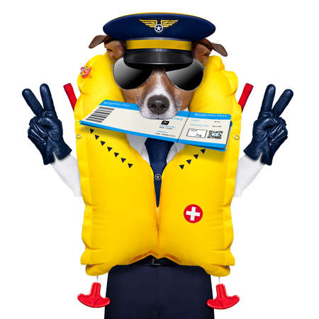 emergency vest: jack russell airline pilot or  flight attendant dog , with check in boarding pass ticket in mouth , isolated on white background, peace and victory fingers