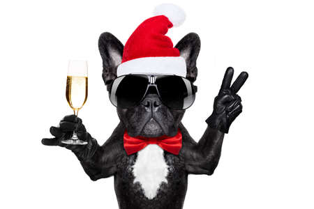 greeting season: santa claus french bulldog dog toasting xmas cheers with champagne glass and victory or peace fingers, for christmas holidays  isolated on white background