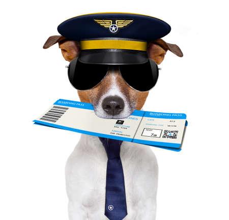 jack russell piloto de linha aérea ou um cão aeromoça, com check-in de bilhetes de embarque na boca, isolado no fundo branco