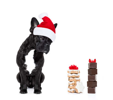 frenchie: hungry french bulldog dog with red  christmas santa claus hat  for xmas holidays and a gift of cookies or treats isolated on white background