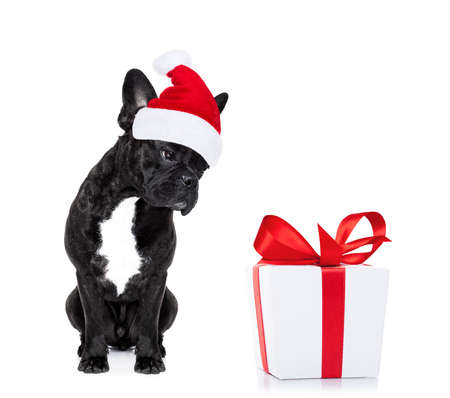 shiny: hungry french bulldog dog with red  christmas santa claus hat  for xmas holidays and a gift or present box isolated on white background Stock Photo