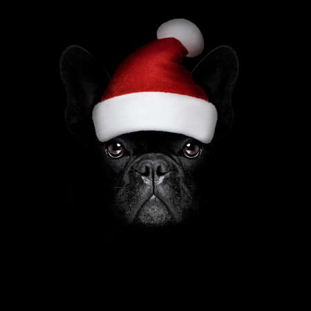 humour: french bulldog  dog  dressed as santa claus with hat for christmas holidays isolated on black dark dramatic background
