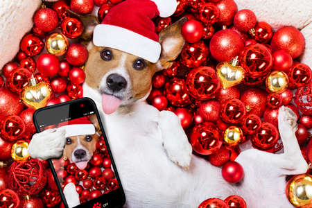 christmas decorations: Jack russell terrier  dog with santa claus hat for christmas holidays resting on a xmas balls background taking a selfie with smartphone or camera