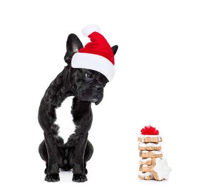 赤いクリスマスと空腹のフレンチ ブルドッグ犬クリスマス休日、クッキーやお菓子の白い背景で隔離のギフトのサンタ クロースの帽子