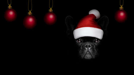 french bulldog  dog  dressed as santa claus with hat for christmas holidays isolated on black dark dramatic background