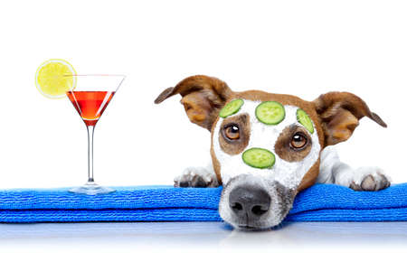 salon: jack russell dog relaxing  with beauty mask in  spa wellness center , moisturizing cream mask and cucumber , isolated on white background, with cocktail drink