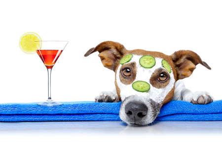 Jack Russell pes relaxaci s krásou maskou v lázeňském wellness centru, hydratační krémy masky a okurky, izolovaných na bílém pozadí, s koktejlový nápoj Reklamní fotografie