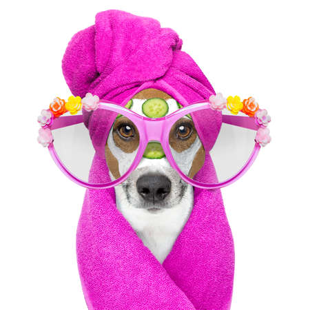 moisturizers: jack russell dog relaxing  with beauty mask in  spa wellness center , moisturizing cream mask and cucumber , isolated on white background