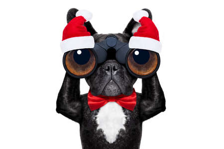 binoculars dog searching, looking and observing with care during xmas or christmas holidays, isolated on white background Stock Photo