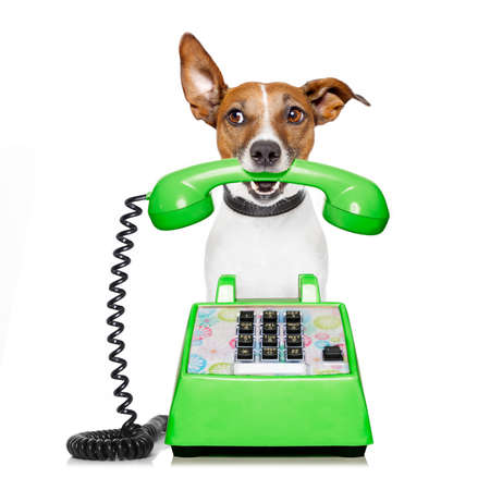 contact: Jack russell dog with glasses as secretary or operator with red old  dial telephone or retro classic phone Stock Photo