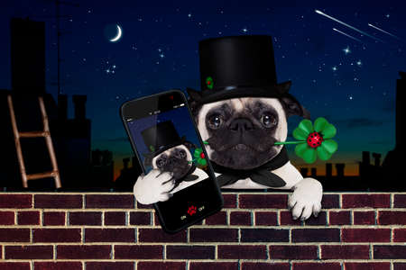 pug dog as chimney sweeper with four leaf clover  behind wall banner or placard, celebrating and toasting for new years eve, taking a selfie with smartphone