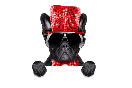 christmas gift: french bulldog dog celebrating new years eve with champagne isolated on white background behind a banner or placard, Stock Photo