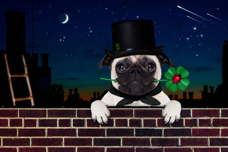 greeting season: pug dog as chimney sweeper with four leaf clover  behind wall banner or placard, celebrating and toasting for new years eve