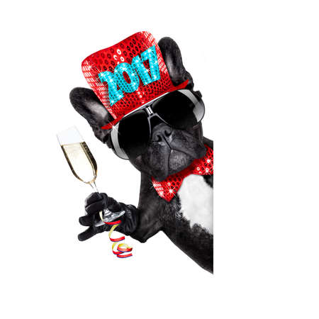 pet services: french bulldog dog celebrating 2017 new years eve with champagne  glass beside banner or placard, isolated on white background