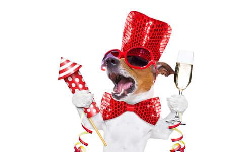 ジャック ラッセル犬をシャンパン グラスで大晦日を祝う花火ロケット、白い背景で隔離の大声で歌う