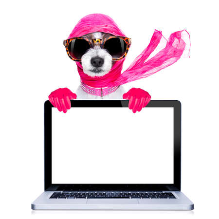 retro woman: chic fashionable diva luxury  cool dog with funny sunglasses, scarf and necklace, isolated on white background, behind laptop pc computer screen ,searching internet