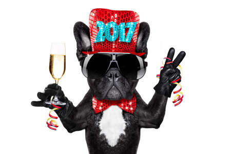 dog in costume: french bulldog dog celebrating 2017 new years eve with champagne glass , victory and peace finger,  isolated on white background
