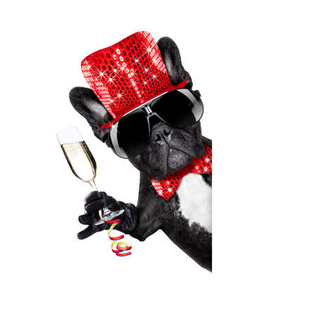 funny glasses: french bulldog dog celebrating new years eve with champagne glass beside banner or placard, isolated on white background