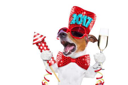 Jack Russell cane che celebra 2017 capodanno con champagne vetro e cantare ad alta voce, con un razzo pirotecnico, isolato su sfondo bianco