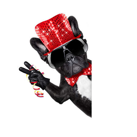 funny glasses: french bulldog dog celebrating new years eve with champagne isolated on white background beside a banner or placard, peace and victory fingers