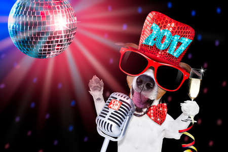 jack russell dog celebrating new years eve with champagne glass and singing out loud, isolated on dark black party nightlife club with retro old microphone Stock Photo