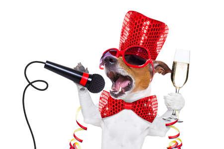 Jack-Russell-Hund Silvester mit Champagner-Glas feiert und laut, mit einem Mikrofon, isoliert auf weißem Hintergrund singen out