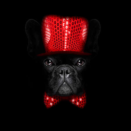 greeting season: french bulldog  dog  dressed with  new years eve  hat for christmas holidays isolated on black dark dramatic background