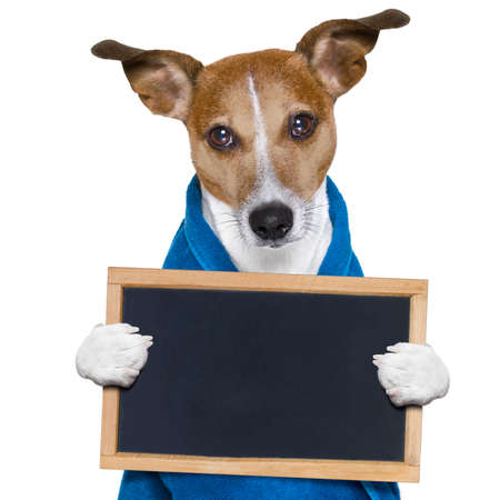 jack russell dog in a towel  not so amused about that , with blue color,  having a spa or wellness treatment or is about to have a shower , holding a placard or banner  blackboard , isolated on white background