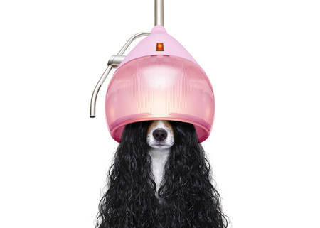 dog  at the hairdressers with long curly hair wig  under the drying hood , isolated on white background