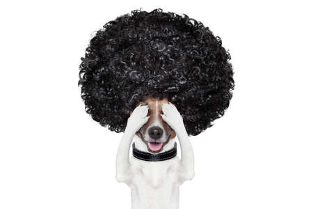 bad hair day: bad hair day dog ready to look beautiful at the wellness spa salon, isolated on white background, hairs gone wild Stock Photo