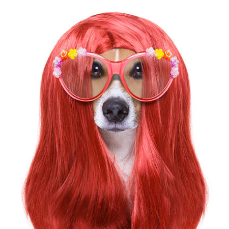 hand: hairdresser dog ready to look beautiful by comb, scissors, dryer, and spray at the wellness spa salon, isolated on white background wearing funny nerd glasses