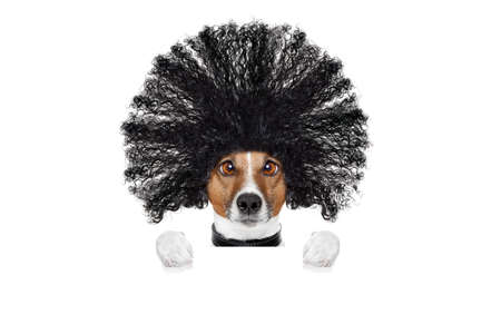 days gone by: bad hair day dog ready to look beautiful at the wellness spa salon, isolated on white background, behind white banner or placard