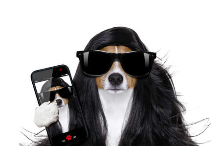 grooming: bad hair day dog ready to look beautiful at the wellness spa salon, isolated on white background, taking selfie with smartphone or tablet Stock Photo