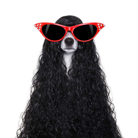 hairdresser dog ready to look beautiful wellness spa salon, isolated on white background wearing red sunglasses Stock Photo