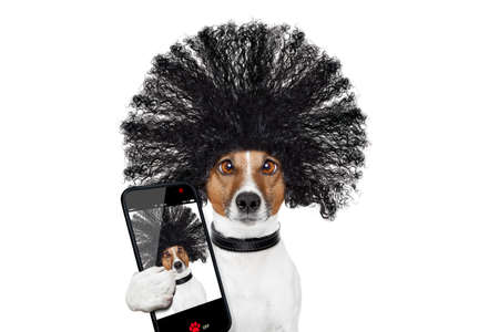 days gone by: bad hair day dog ready to look beautiful at the wellness spa salon, isolated on white background, taking selfie with smartphone or tablet Stock Photo