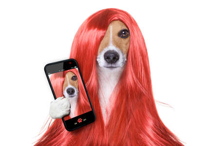 photo: hairdresser dog ready to look beautiful by comb, scissors, dryer, and spray at the wellness spa salon, taking a selfie with smartphone or tablet