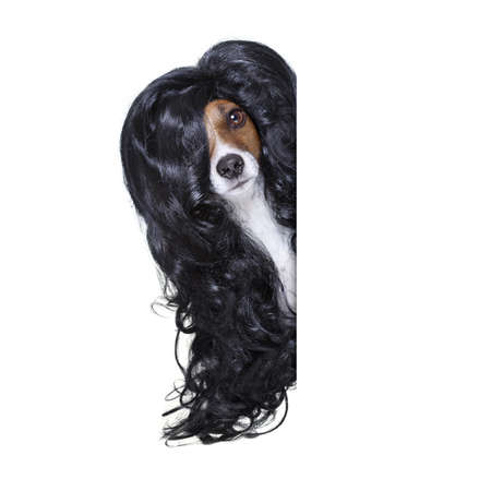 dog grooming: hairdresser dog ready to look beautiful by comb, scissors, dryer, and spray at the wellness spa salon, isolated on white background behind a white banner or placard poster