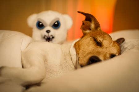 satanas: Jack Russell perro que duerme bajo la manta en la cama del dormitorio, enfermo o cansado, que tiene una pesadilla o mal sueño (FOTO LUZ BAJA)
