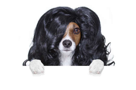 hairdresser: hairdresser dog ready to look beautiful by comb, scissors, dryer, and spray at the wellness spa salon, isolated on white background behind a white banner or placard poster