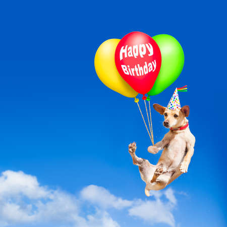 Chihuahua perro colgando de globo, volando y deslizándose en el cielo en el aire, mientras que ser cool con sombrero de cumpleaños, tener una fiesta