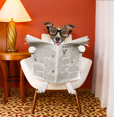jack russell dog reading newspaper on a chair or  sofa , couch, or lounger , in living room , table and reading light to the side