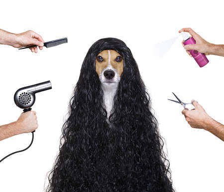 grooming: hairdresser dog ready to look beautiful by comb, scissors, dryer, and spray at the wellness spa salon, isolated on white background