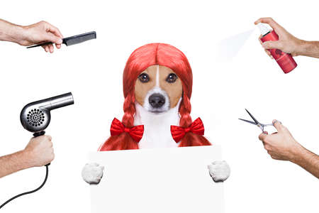 scissors: hairdresser dog ready to look beautiful by comb, scissors, dryer, and spray at the wellness spa salon, isolated on white background behind a white banner or placard poster