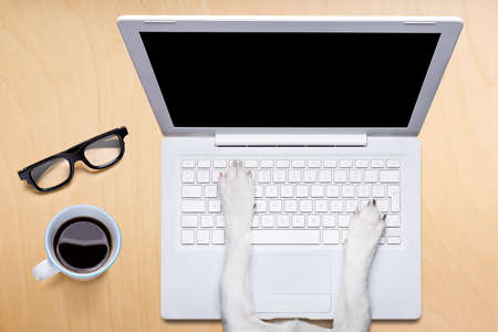 office desk: jack russell dog office worker ,  black glasses typing in a  pc computer laptop,  isolated on desk  background, coffee mug on table