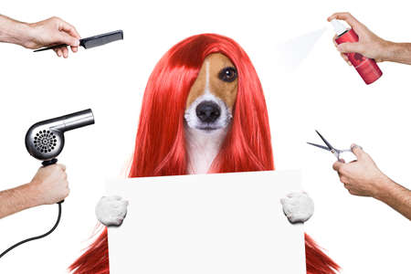 scissors: hairdresser dog ready to look beautiful by comb, scissors, dryer, and spray at the wellness spa salon, isolated on white background holding a white banner or placard