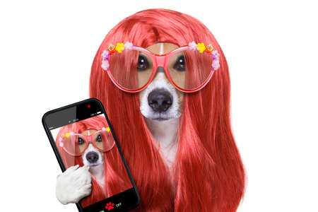 hairdresser dog ready to look beautiful by comb, scissors, dryer, and spray at the wellness spa salon, taking a selfie with smartphone or tablet