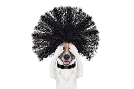 bad hair day dog ready to look beautiful at the wellness spa salon, isolated on white background, hairs gone wild Stock Photo